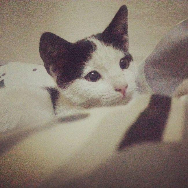 Little Cat Kirli Sweety