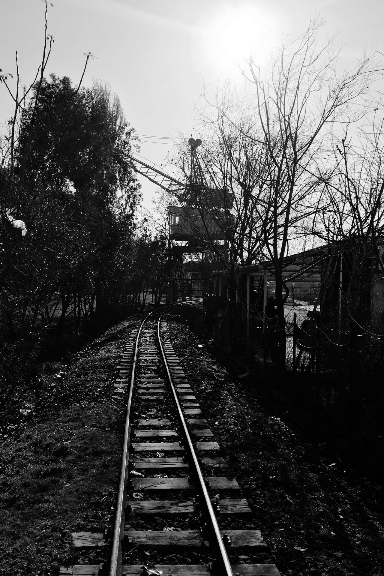Railroad Track Tree The Way Forward Sky Railway Railway Track Railroad B&w Blackandwhite Black And White Outdoors