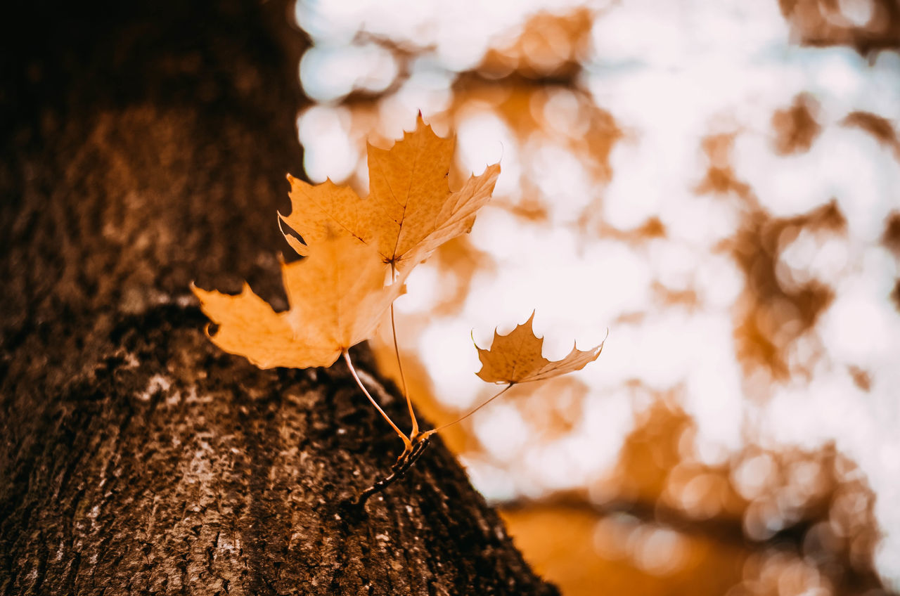 Autumn Autumn Colors Autumn Leaves EyeEm Best Shots EyeEm Nature Lover Poland The Week On EyeEm Water Reflections Autumn Autumn🍁🍁🍁 Beauty In Nature Bokeh Cold Temperature Day Focus On Foreground Kaszuby Kaszuby Eyeem Leaf Nature No People Outdoors Poland Eyeem Tree Water Yellow