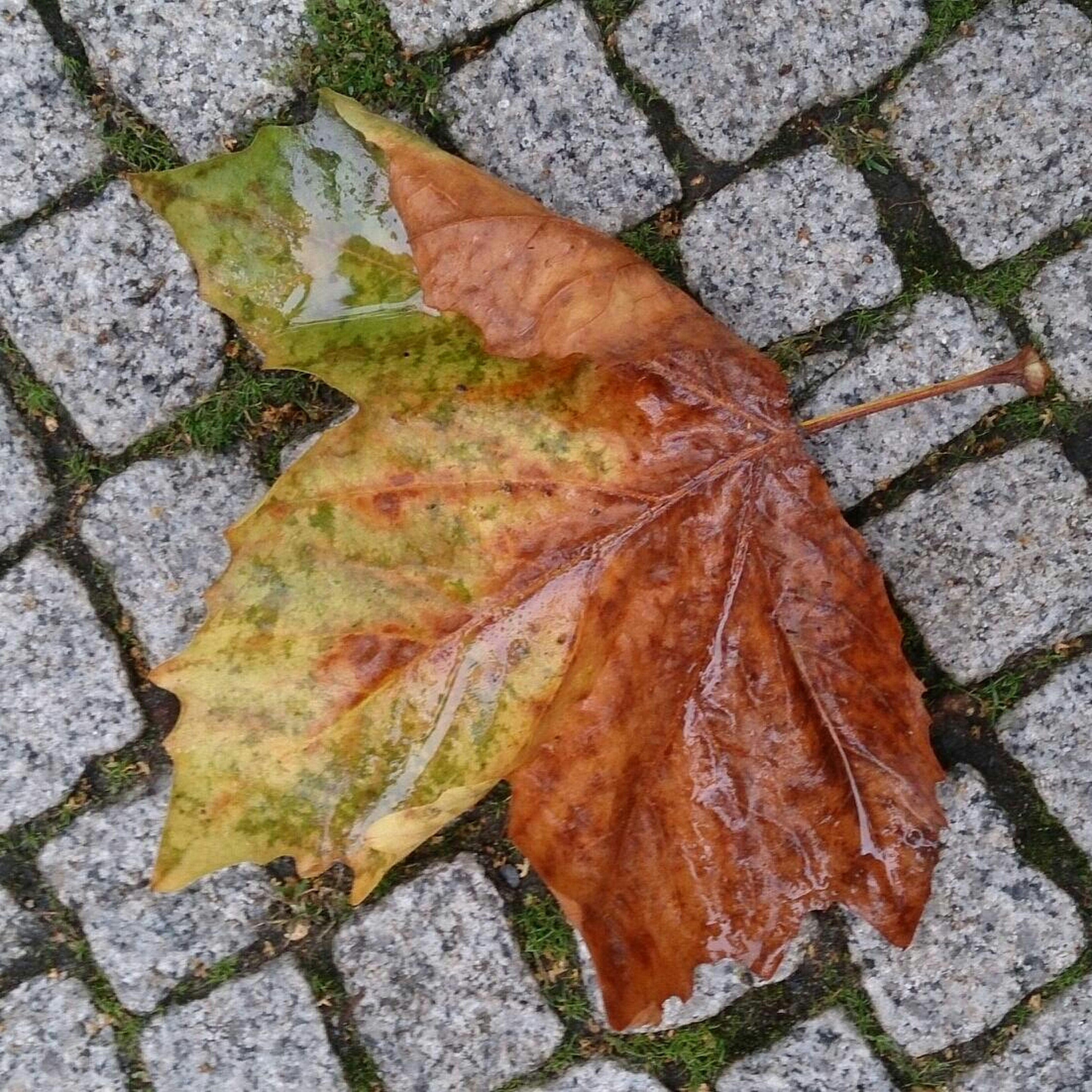 leaf, autumn, high angle view, dry, change, street, season, leaves, fallen, close-up, textured, nature, day, outdoors, ground, directly above, no people, natural pattern, cobblestone, wet