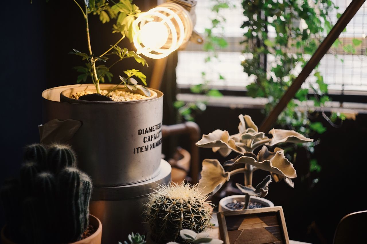 Plant Potted Plant Flower Pot Flower No People Nature Growth Indoors  Close-up Freshness Day