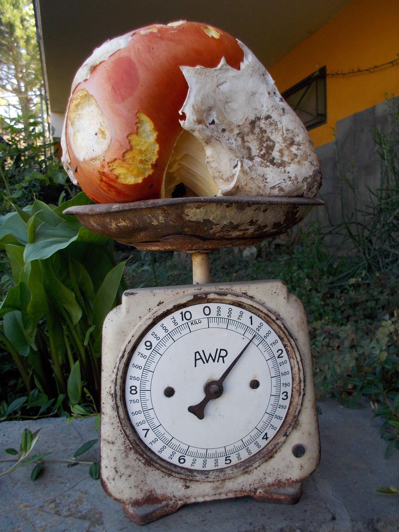 esageratoooo Abundance Amanita Caesarea Bilancia Funghi Natura