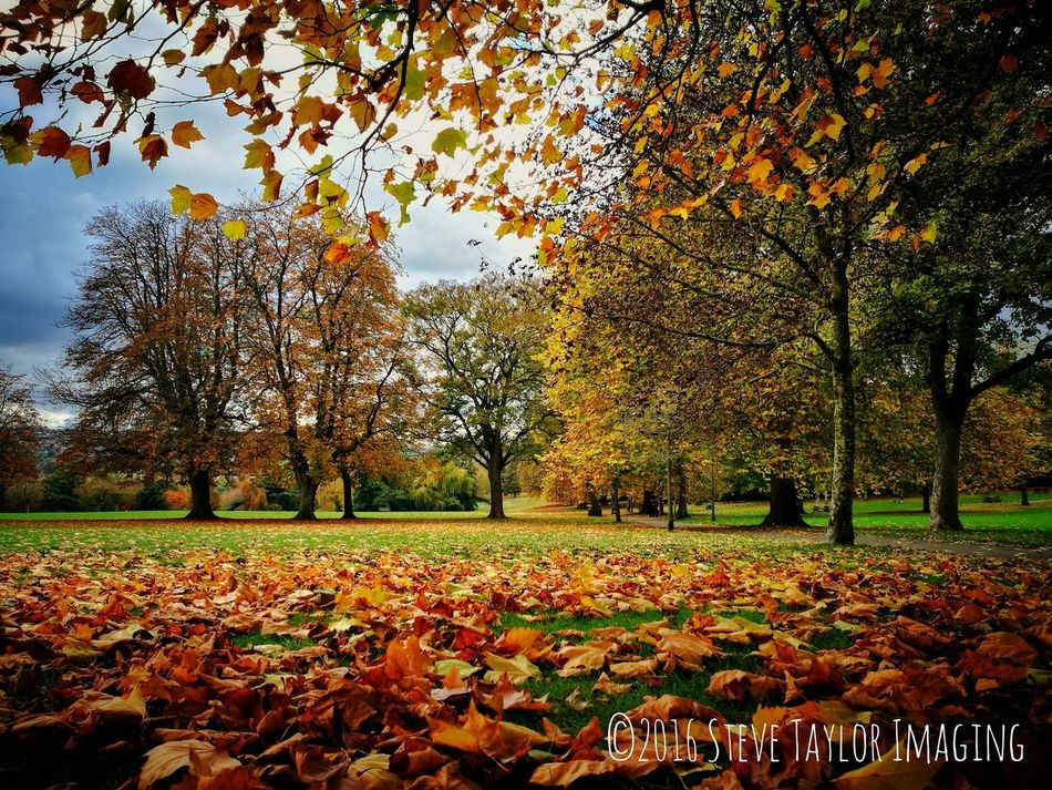 HuaweiP9plus HuaweiP9 Captured On P9 Beauty In Nature Tree Nature Leaf Change Autumn Oo