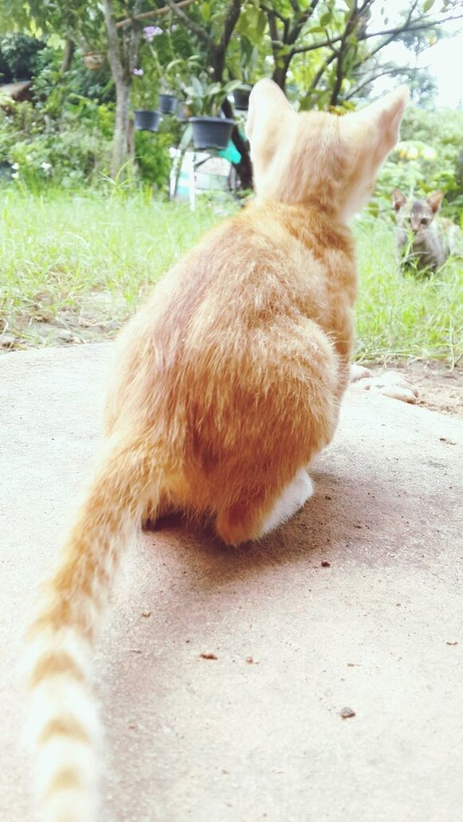 My Little Cat☺ cat Cat♡ Little Cat lovely pet Lovely Pet