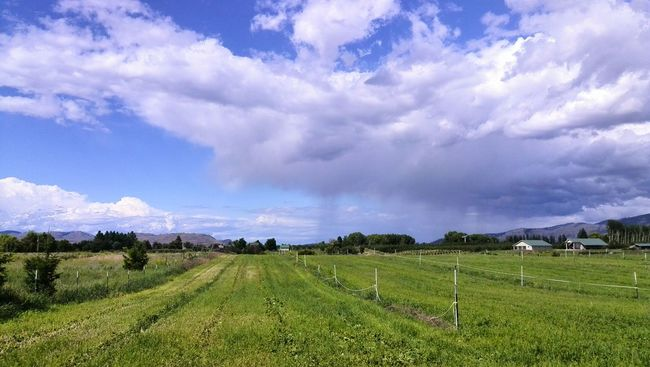 Rainclouds Rainy Days☔ Taking Photos Sky Sky And Clouds Clouds And Sky Omak WA Omak,WA Washington State Irrigation Pasture Land Unenhanced Rural Cloudy My Point Of View