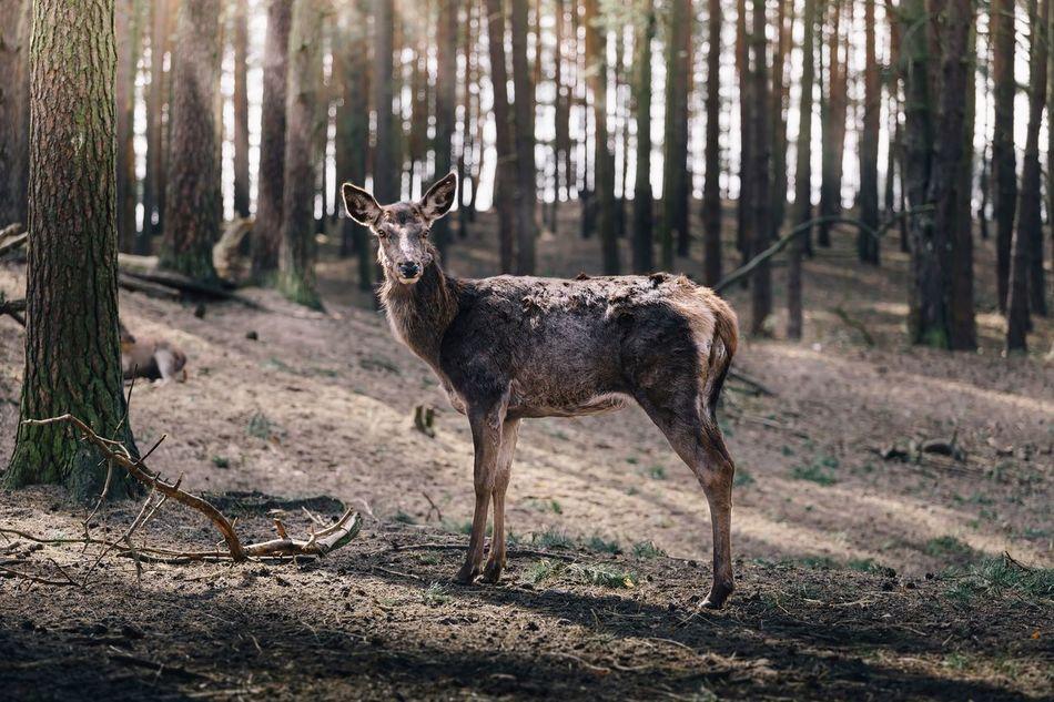 Beautiful stock photos of wildlife, Animal Themes, Animal Wildlife, Animals In The Wild, Day