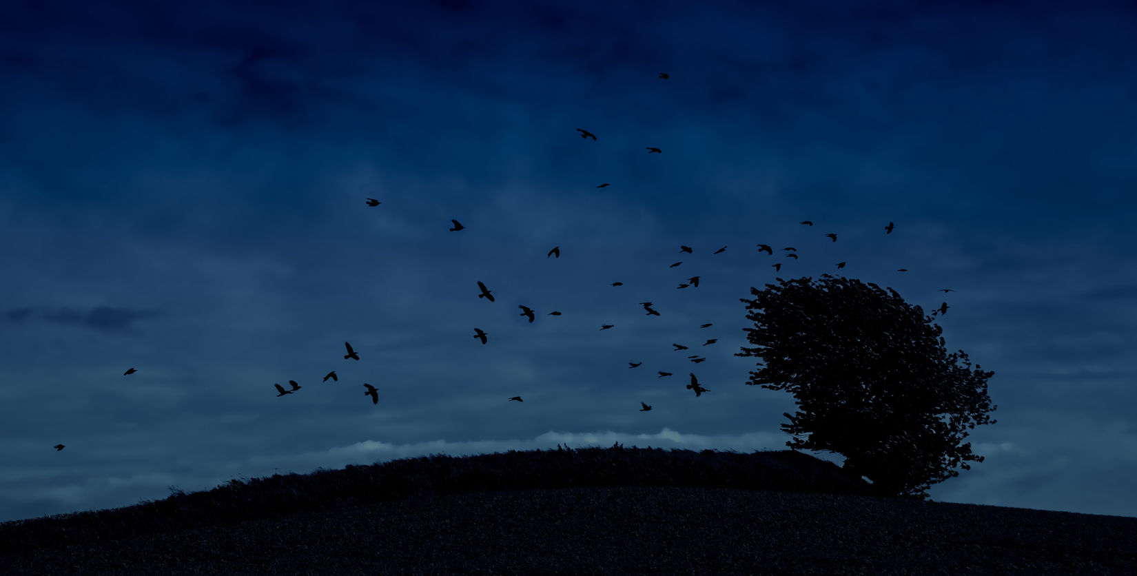 Atmosphere Atmospheric Mood Bad Sign Crows Flock Flock Of Birds Flock Of Birds Mid-air Night Omen Outdoors Ravens Sign Silhouette Spread Wings Tranquil Scene Tree