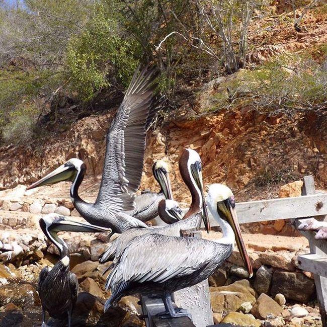 Mochima Mountains Vacation 2016 Venezuela Viajandoconcedula Beach Birds Nature's Diversities The Great Outdoors - 2016 EyeEm Awards Found On The Roll Sucre