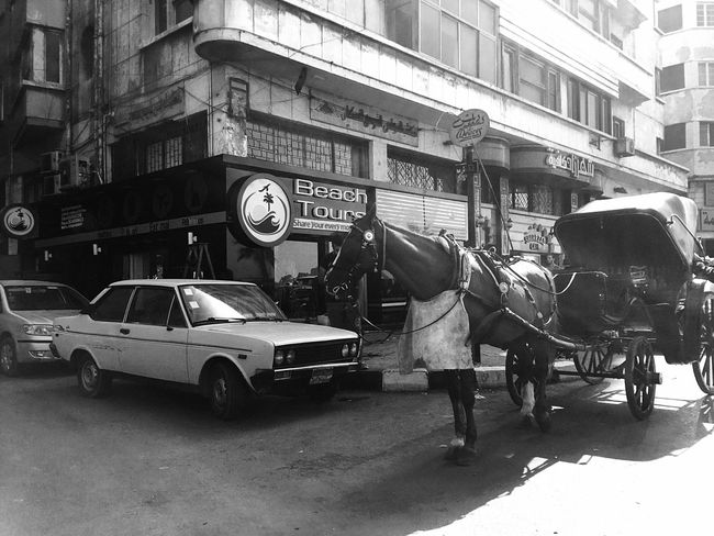 Monochrome Photography IPhoneography Carriage Carriage Ride Horse Culture Alexandria Egypt