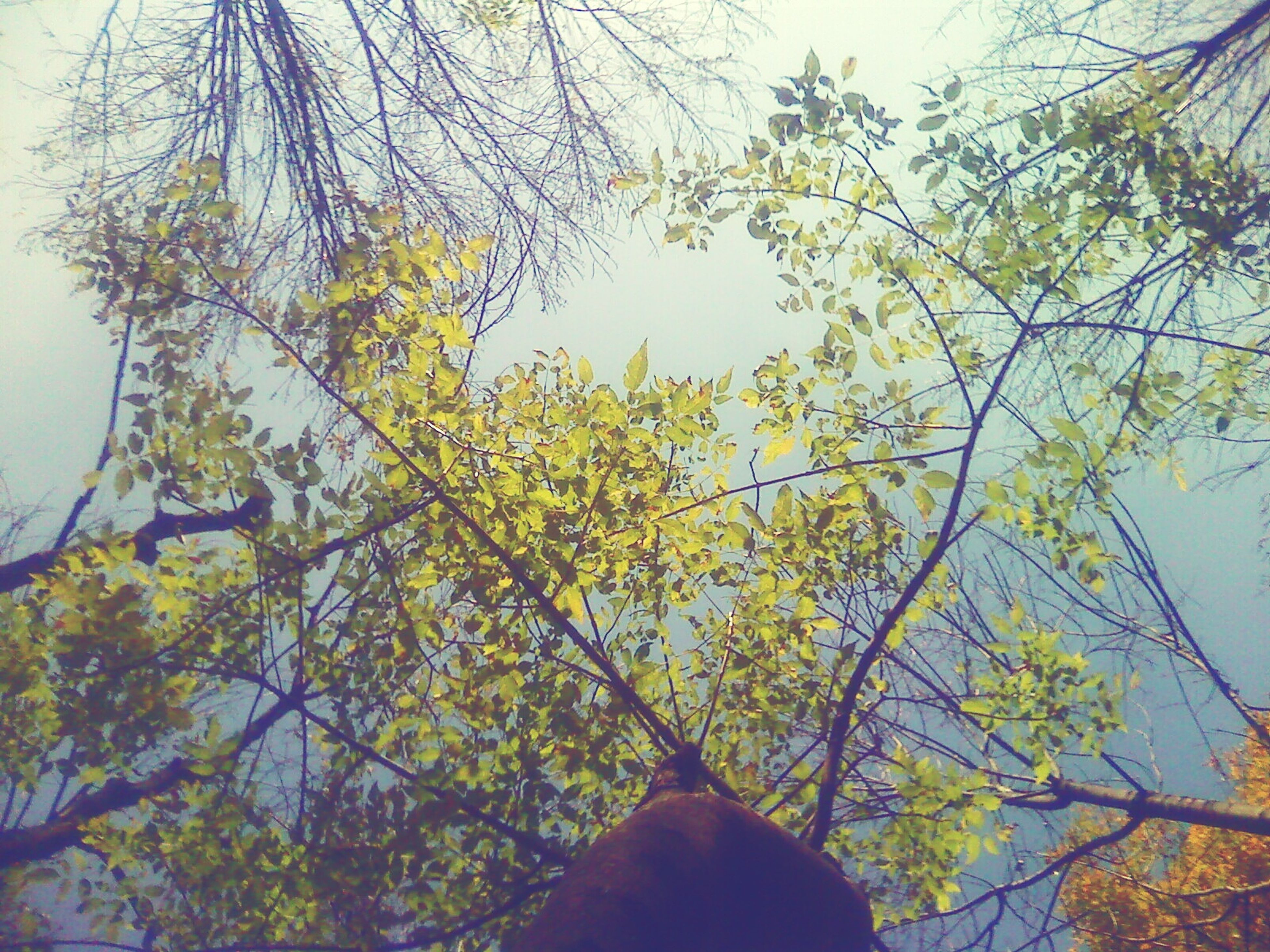 tree, branch, low angle view, growth, clear sky, nature, leaf, autumn, sky, tranquility, beauty in nature, day, outdoors, change, scenics, sunlight, tree trunk, yellow, no people