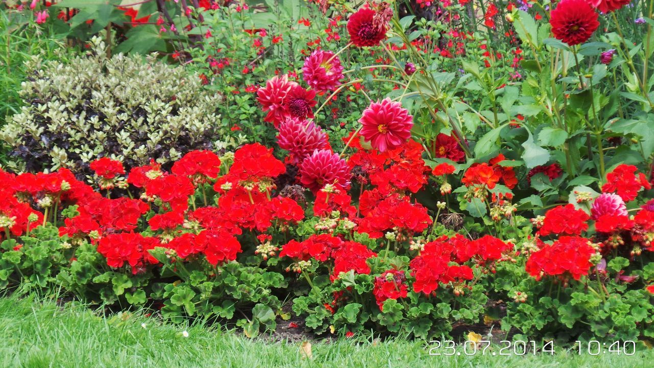growth, flower, plant, red, nature, beauty in nature, leaf, freshness, outdoors, blooming, fragility, no people, day, flower head