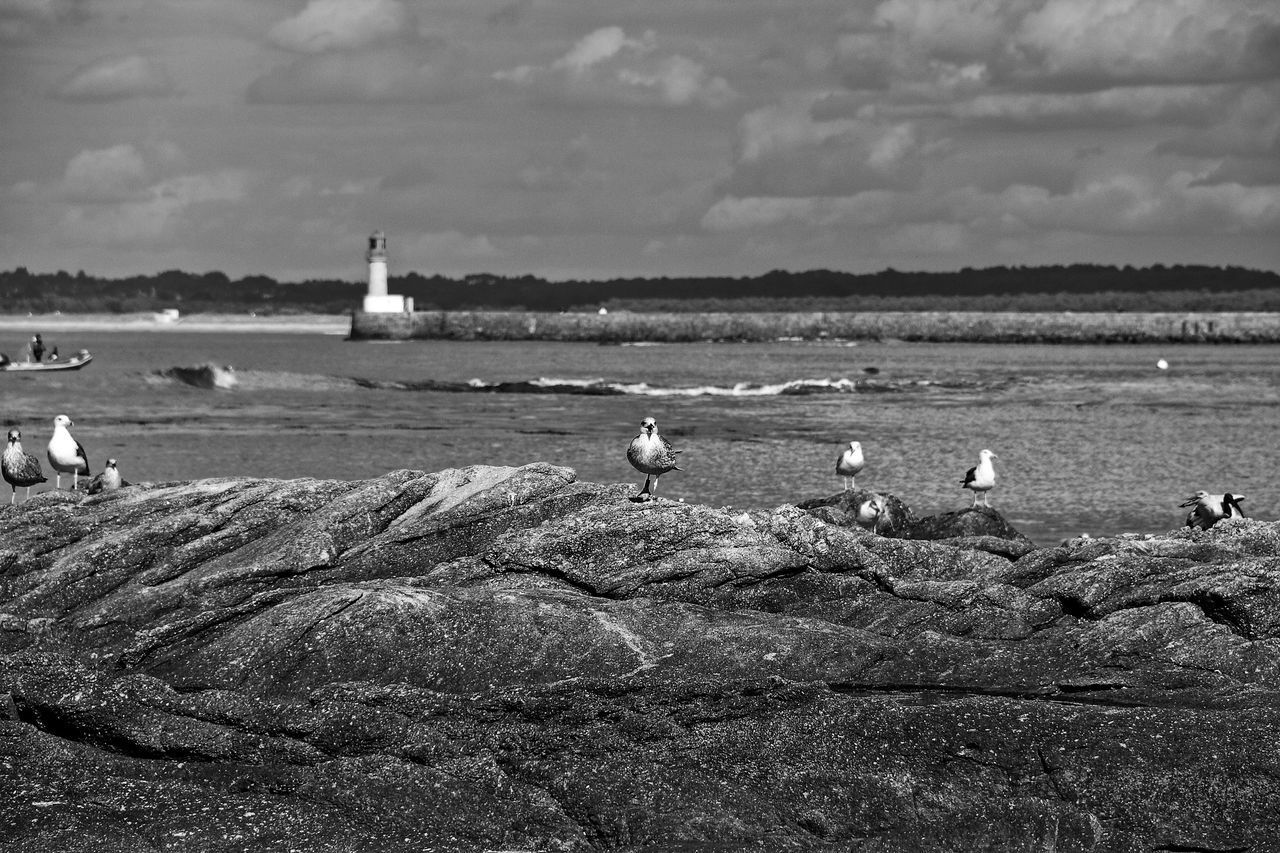Black & White Pier Animal Wildlife Animals In The Wild Beauty In Nature Bird Black And White Cloud - Sky Lighthouse Low Tide Nature No People Outdoors Perching Rocks Sea Seagull Seagulls And Sea Seaside Sky Standing Birds Water Wildlife