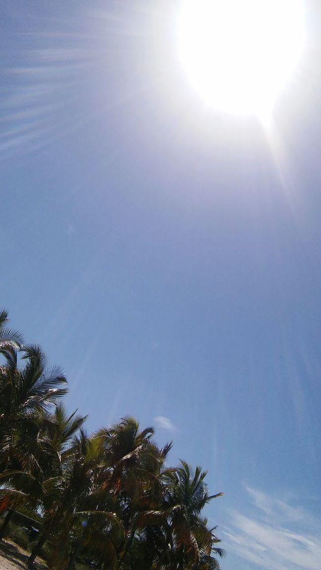 """Oh Mr. Sun!"" OhMr.Sun Relaxing Sunshine ☀ Palm Trees"