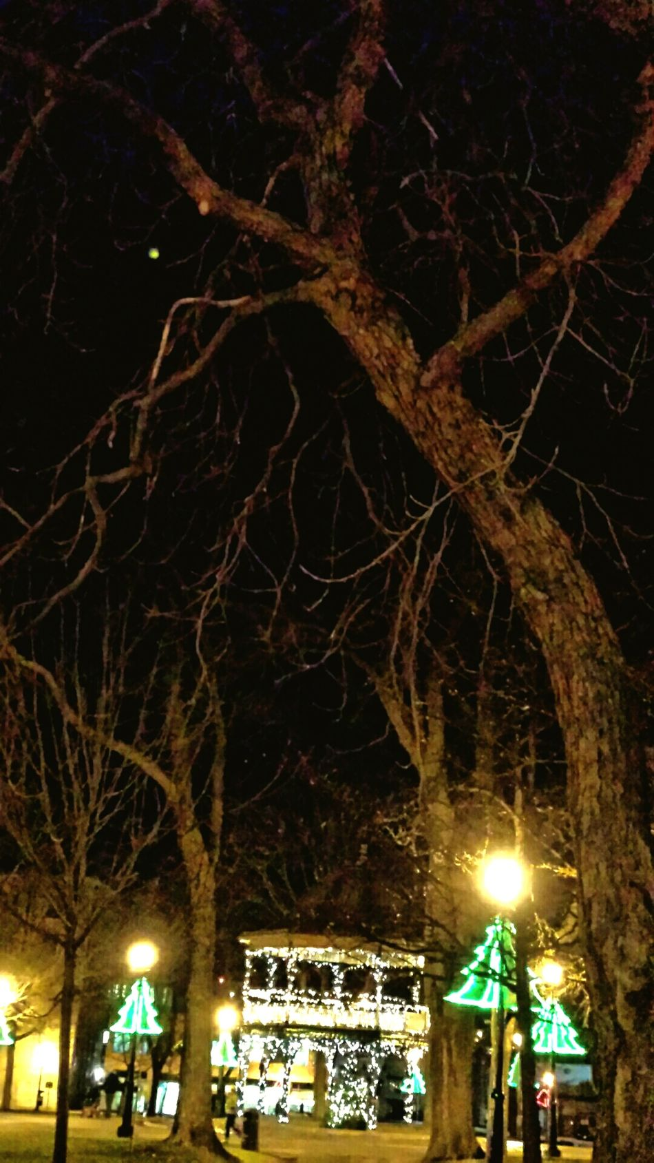 Check This Out ... the juxtaposition of haunting trees falling around the celebratory innocence of Christmas lights in the bandstand.