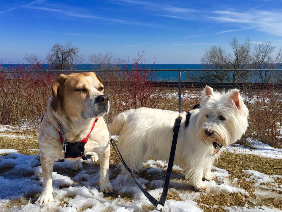 Nice day for a walkabout 😊 Port Union Village Waterfront Trail Scarborough Toronto Lake Ontario Dogs IPhoneography Dog Walking