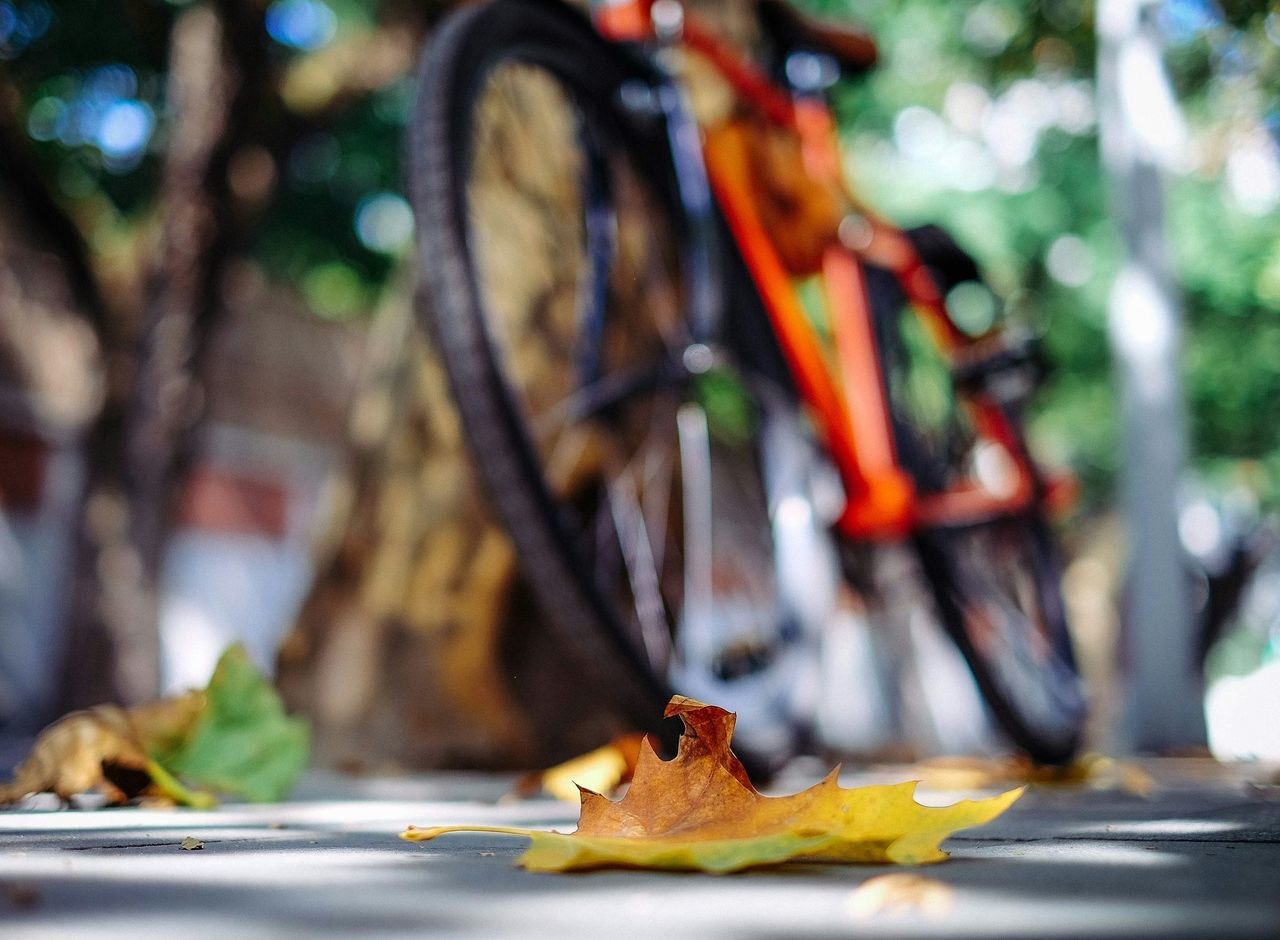 Beautiful stock photos of bike, Aging Process, Day, Fallen, Footpath