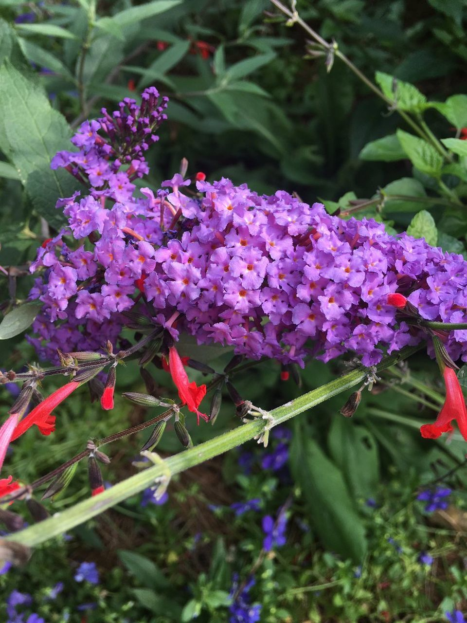 flower, purple, growth, nature, freshness, beauty in nature, fragility, day, plant, no people, outdoors, green color, close-up, lilac