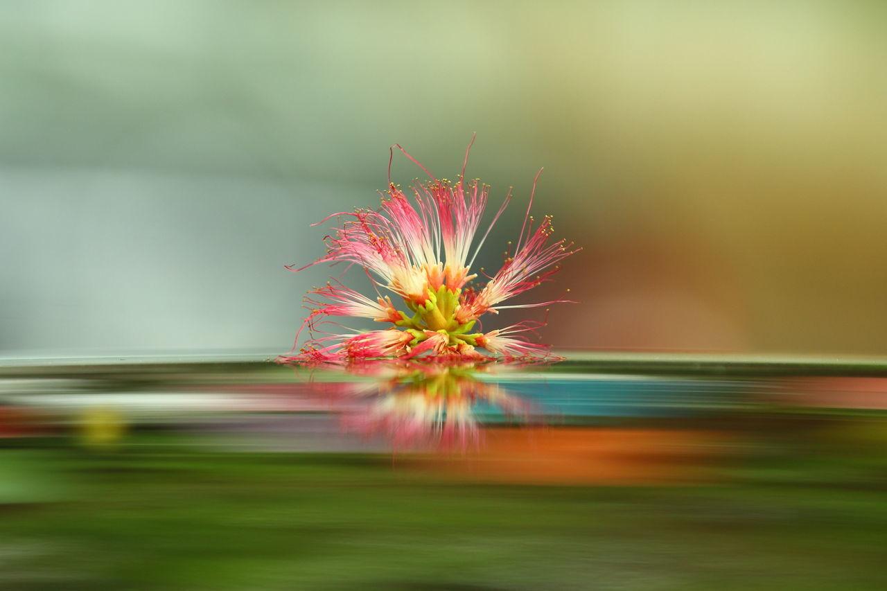 Red Flower In Pond