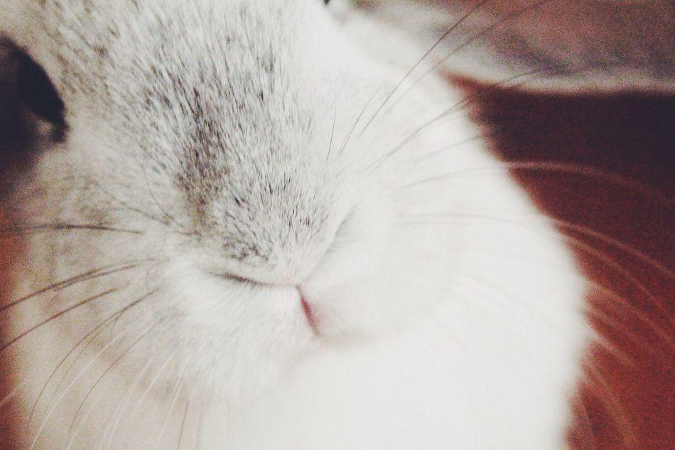 Beautiful stock photos of rabbit, Animal Head, Animal Mouth, Animal Themes, Close-Up