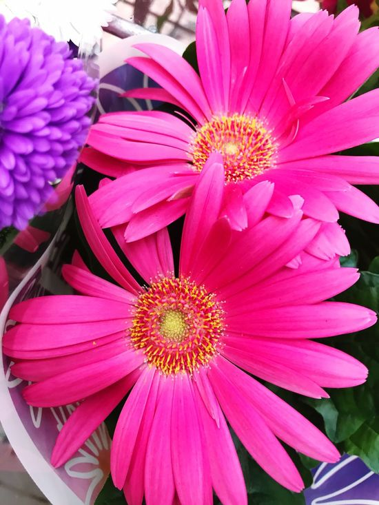 Flower Pink Color Nature Outdoors Close-up