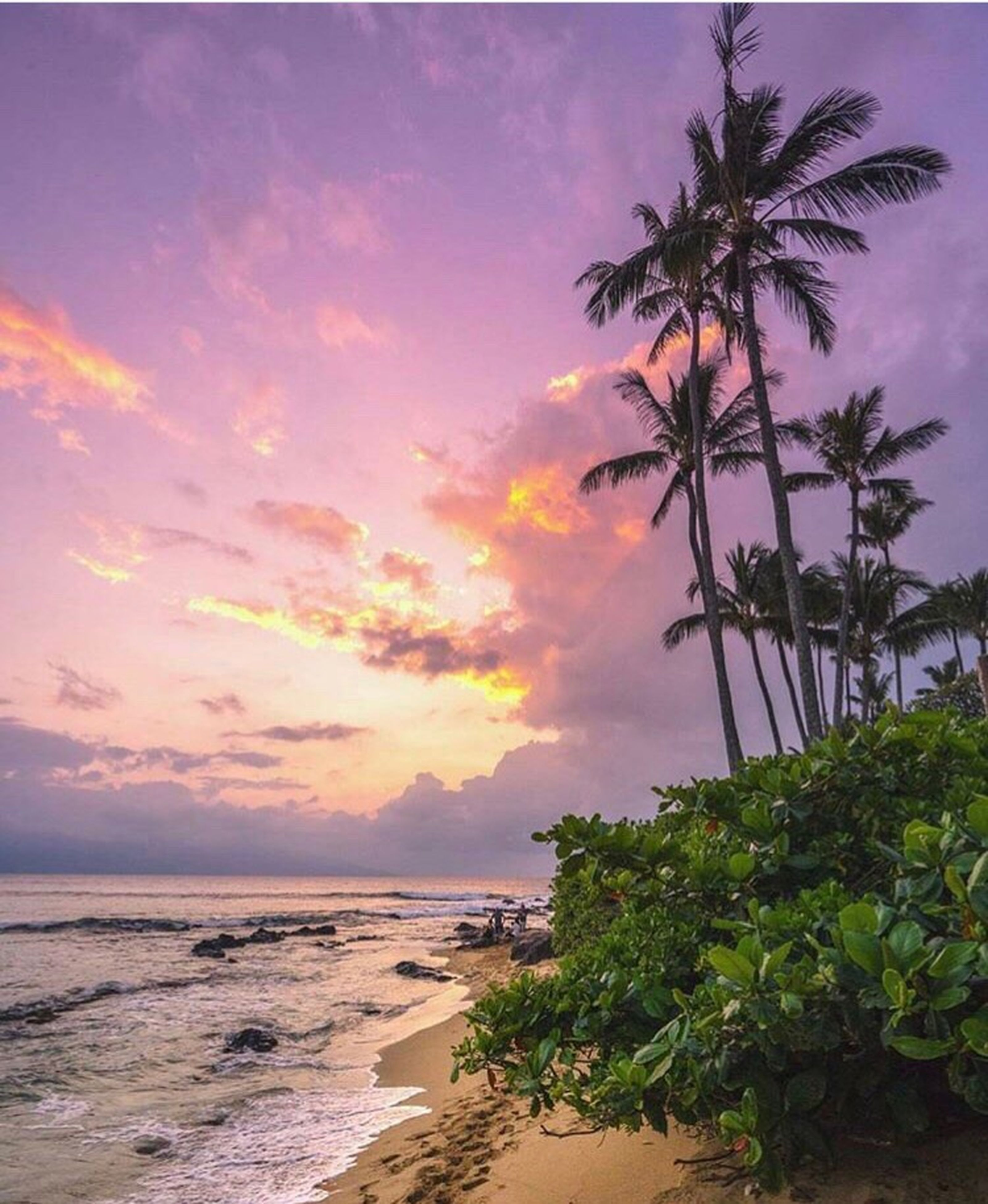 palm tree, sea, beach, scenics, nature, beauty in nature, sunset, tree, tranquil scene, sky, water, no people, tranquility, horizon over water, outdoors, cloud - sky, sand, growth, day