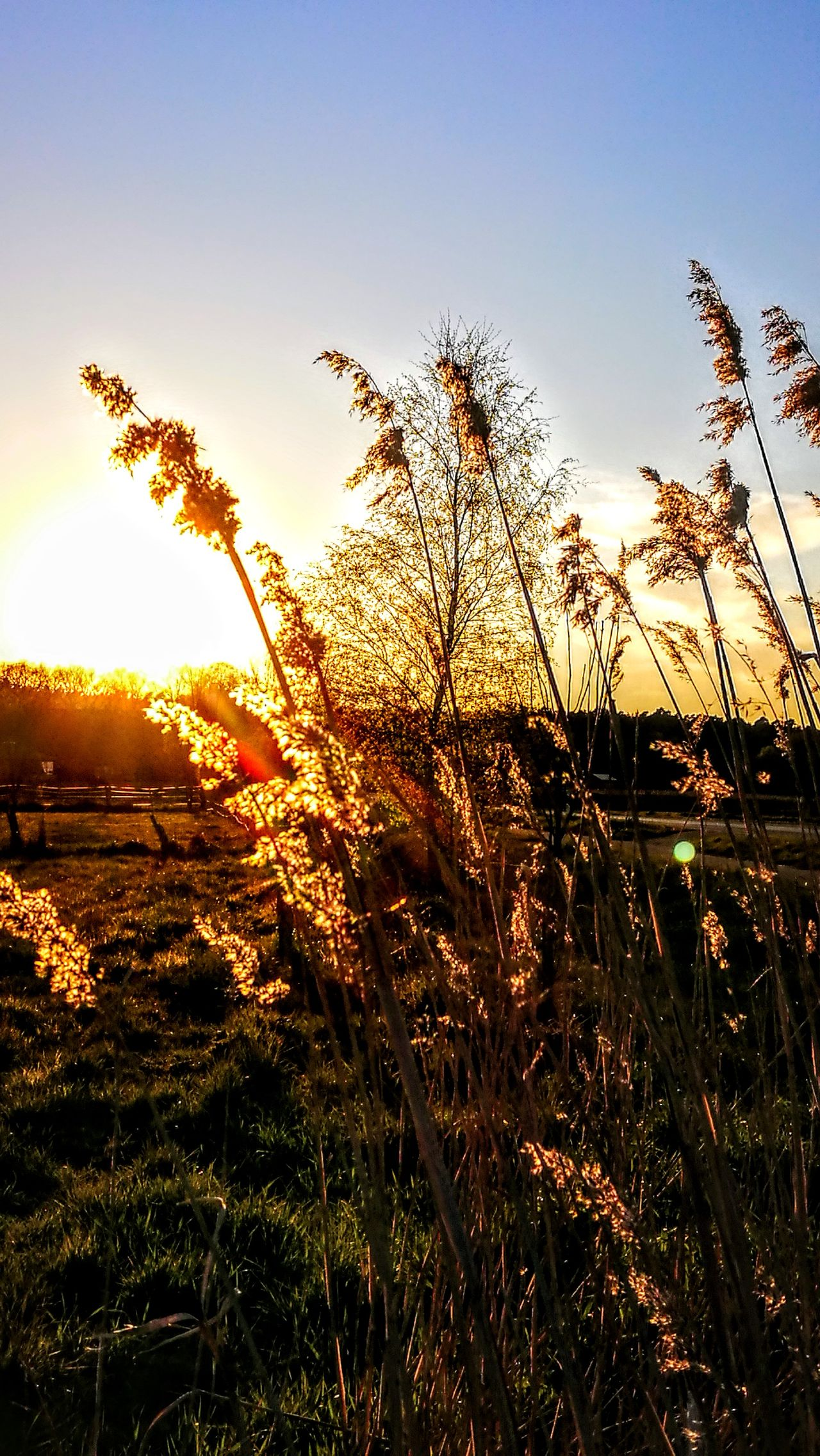 Wild Nature...in Sundown... Growth Nature Sunset Grass Outdoors Plant Silhouette Field Sky Sunlight No People Beauty In Nature Tranquility Rural Scene GetbetterwithAlex Originalpicture Tranquil Scene Agriculture Day Scenics Flying Cereal Plant Bird