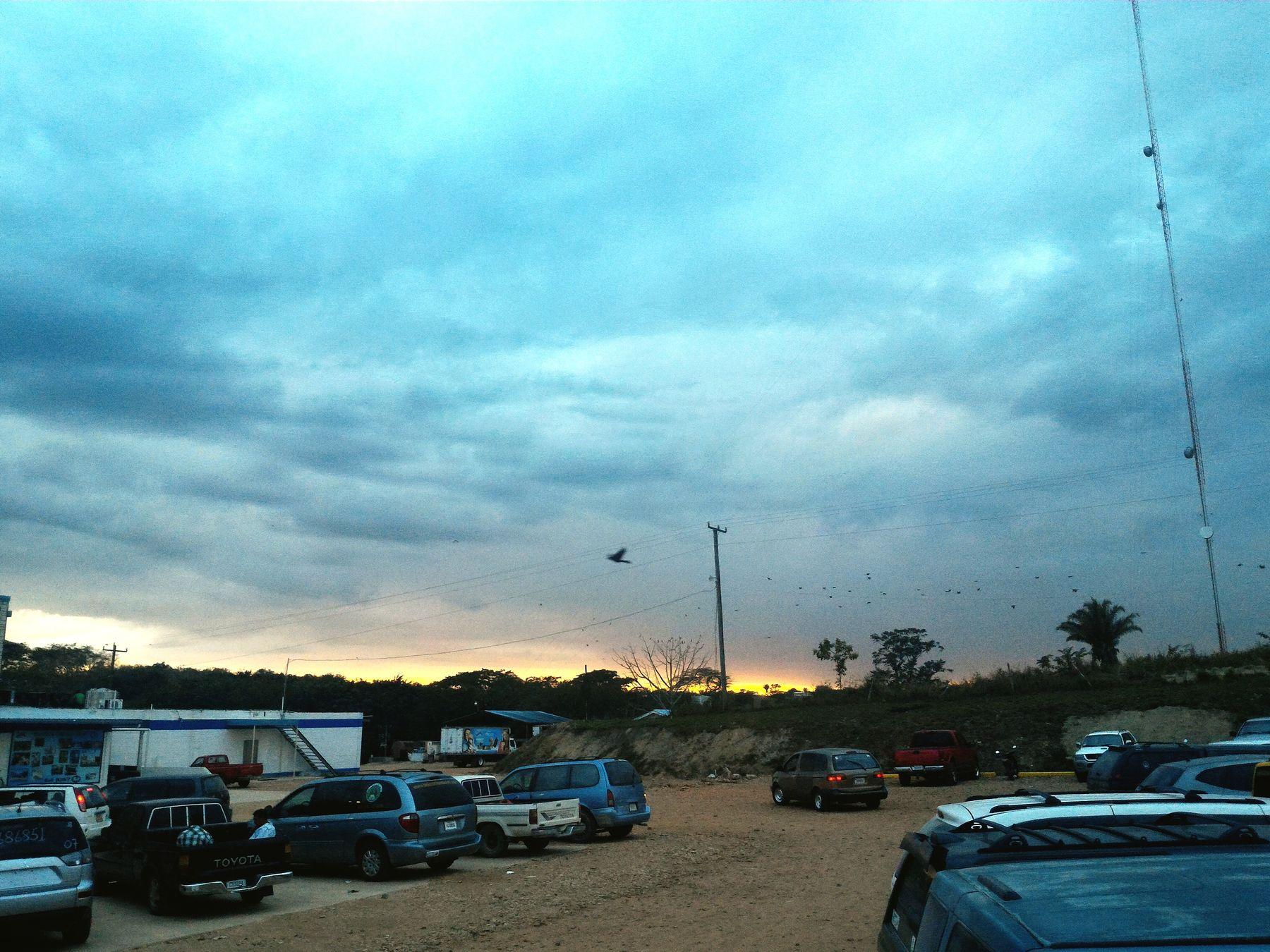 Sunset Birds Satuerday