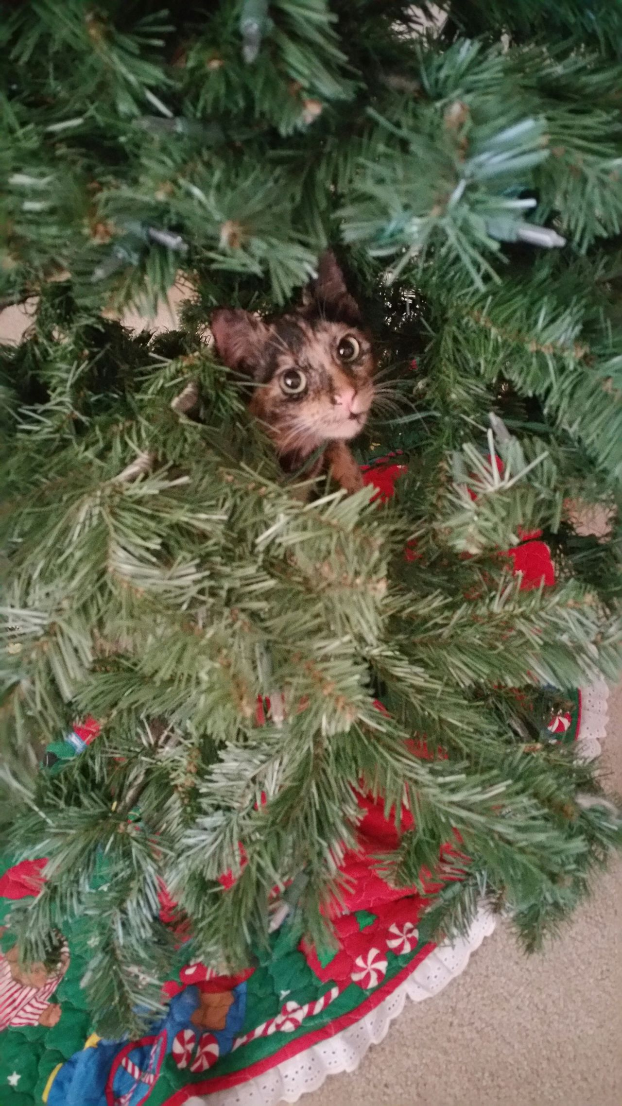 Showcase: December Christmas Tree Kitten Hanging Out No Ornaments Climbing Abbicat First Eyeem Photo