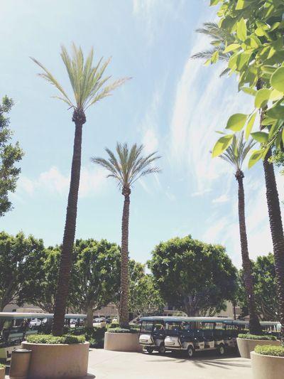 Throwback to LA Los Ángeles Warner Bros Studios Palm Trees Sky