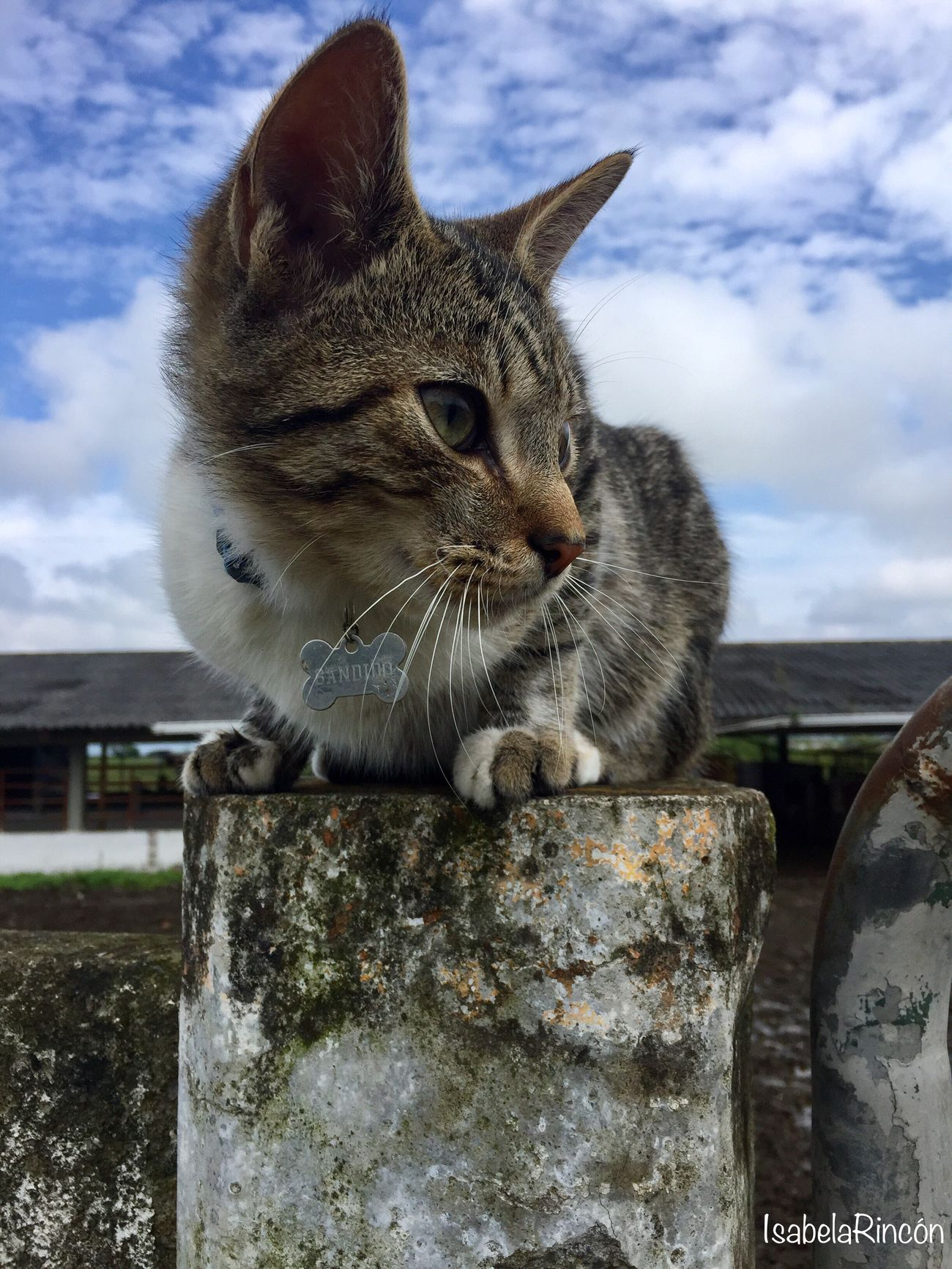 Domestic Cat Sky One Animal Animal Themes Domestic Animals Mammal Pets Cloud - Sky No People Day Outdoors Close-up Retaining Wall