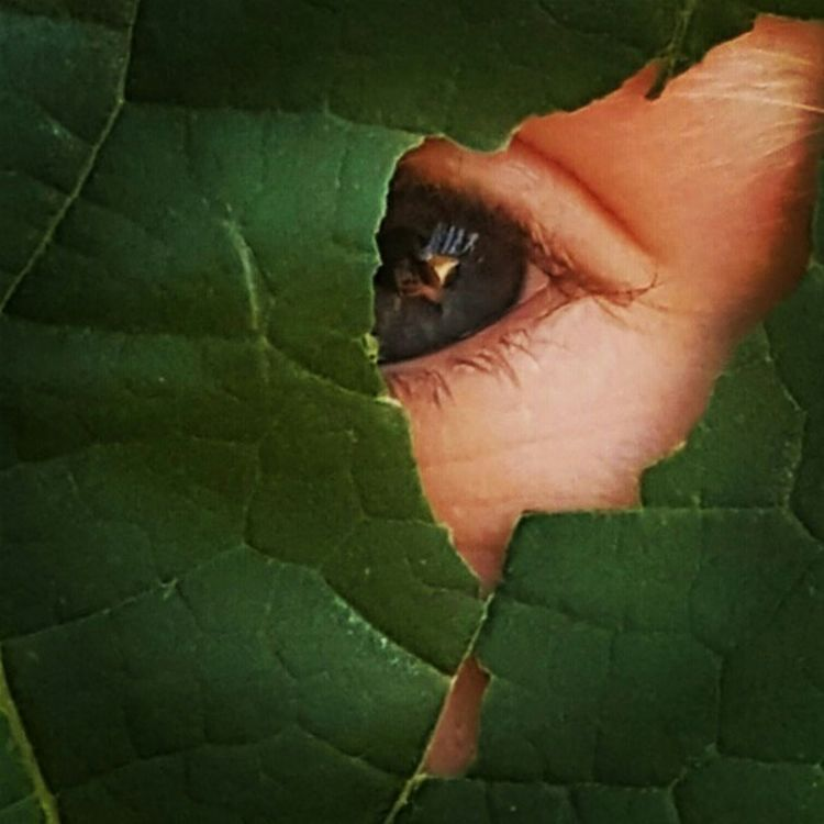 Eye See You Blue Green Leaf Nature_collection Landscape_collection EyeEmNatureLover Eye Leaf Vein Looking Through Masked Hidden Faces Camouflaged Hidding Behind Blue Eyes Behind Abstract Nature Outdoor Photography Fine Art Photography Pivotal Ideas Colour Of Life Eyeemphoto
