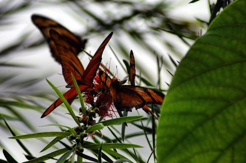 Butterfly Group Of Butterfly's Nature Flora And Fauna Tropical Paradise Habitat Togheter Atmospheric Nature Fragile Beauty Leaves