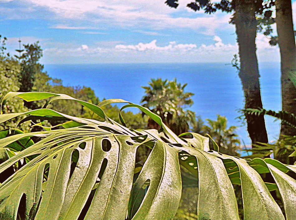 Palm Tree Rural Scenes Travels Colors Outdoors Travelling Photography Madeira Island Madeira Oceanscape Tranquility Flowers, Nature And Beauty Ocean View Oceanside Ocean No People Outdoors