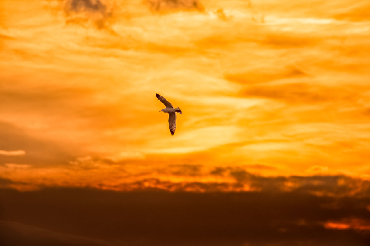 Lone Seagull Flying off into the Sunset Abstract Alone Animal Themes Beauty In Nature Cloud Cloud - Sky Clouds And Sky Dramatic Sky Flying Hopes And Dreams Landscape Landscape_Collection Loneliness Mid-air Nature Orange Orange Color Orange Sky Outdoors Seagull Sky Sunlight Sunset Sunset_collection Vibrant