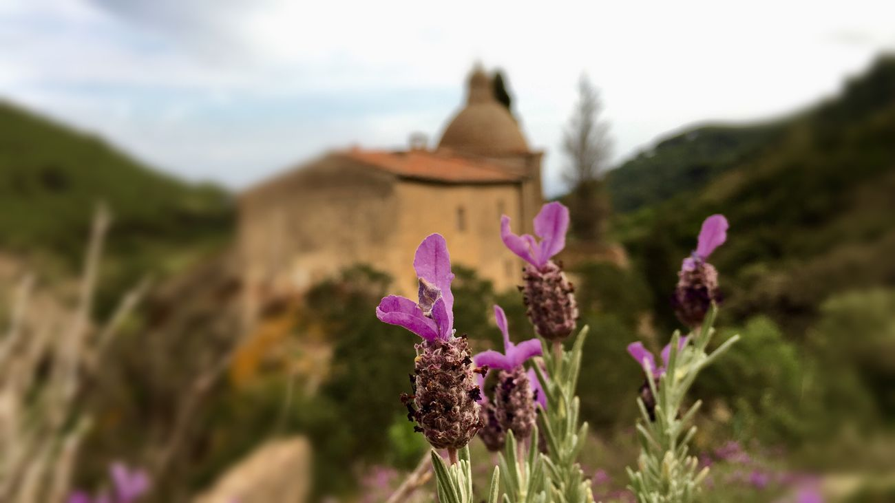 Elba Island  Flower Church Lavenderflower Lavender