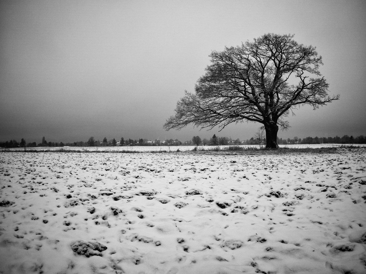 winter, cold temperature, snow, bare tree, tree, tranquility, nature, lone, landscape, weather, beauty in nature, isolated, tranquil scene, branch, scenics, outdoors, clear sky, day, sky, no people