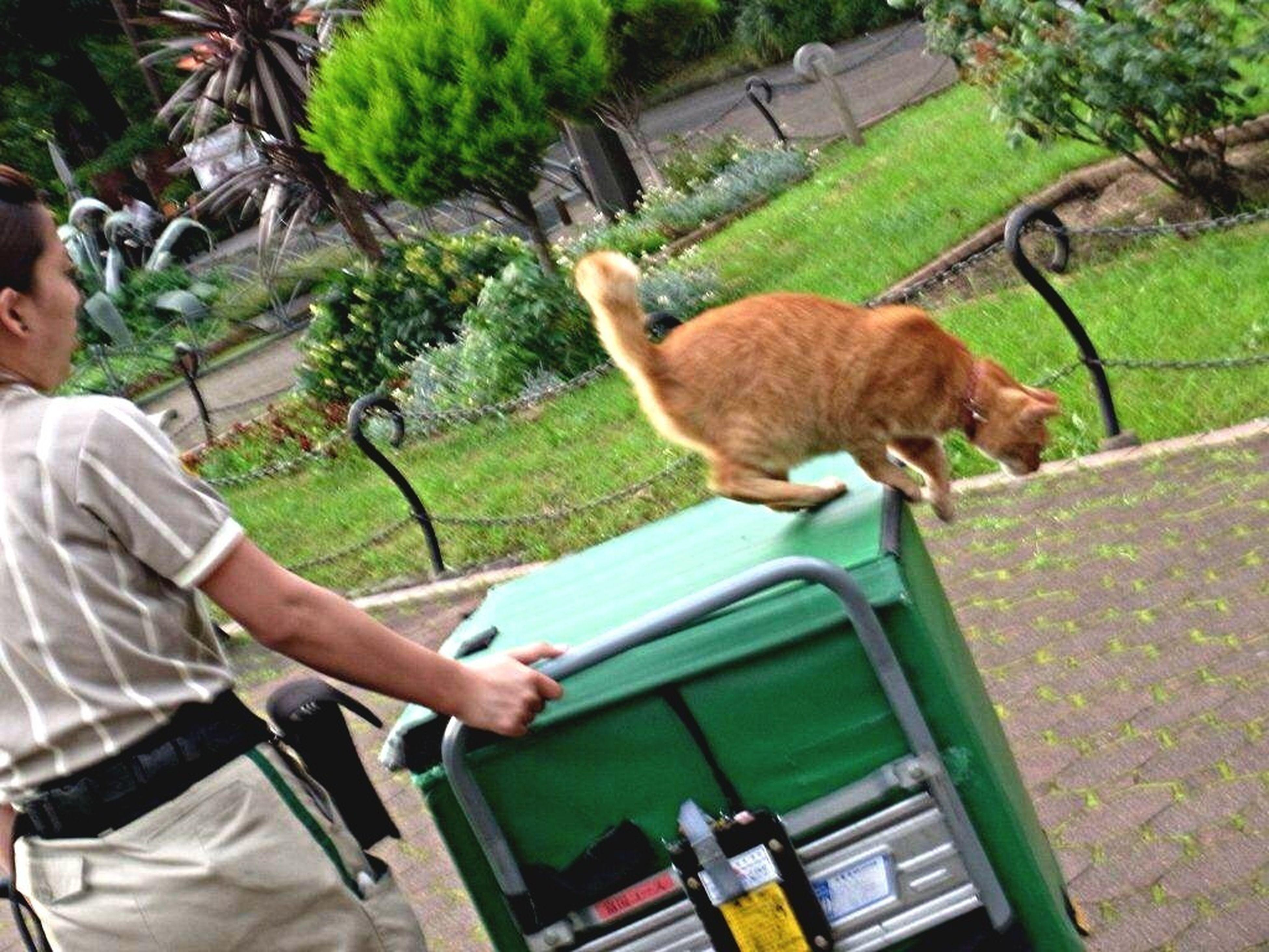 クロネコ野良猫に襲われるの巻