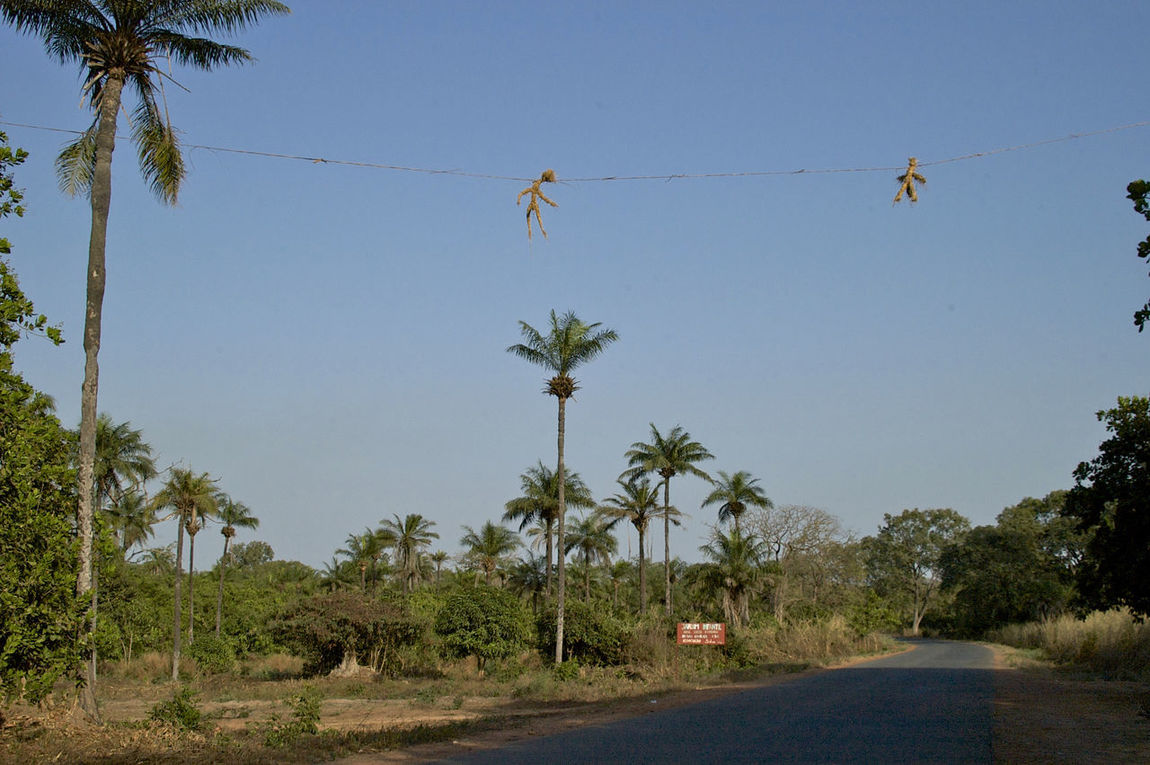 On the road to Varela Guinea-Bissau Fetisch  Guinea Guinea-Bissau Republic Of Guinea-Bissau República Da Guiné-Bissau Voodoo Doll West Africa Africa African Road Blue Clear Sky Day Outdoors Palm Tree Tree Voodoo