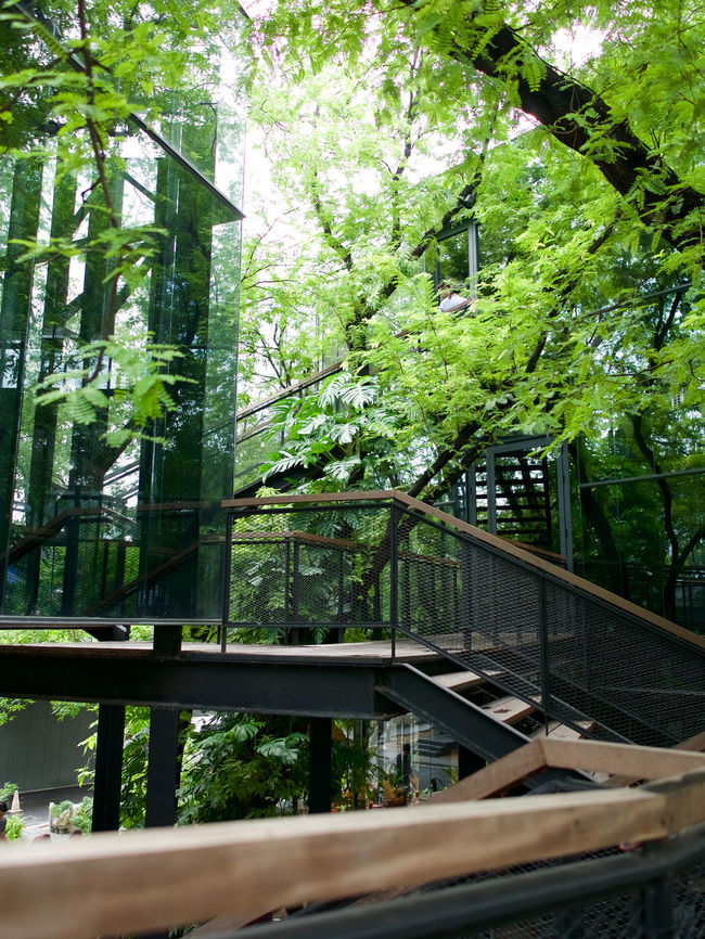 wooden tree house in the bangkok Architecture Branch Bridge City Life Connection Day Freshness Green Color Growth Iron - Metal Natural Nature No People Outdoors Plant Scenics Tranquil Scene Tranquility Tree