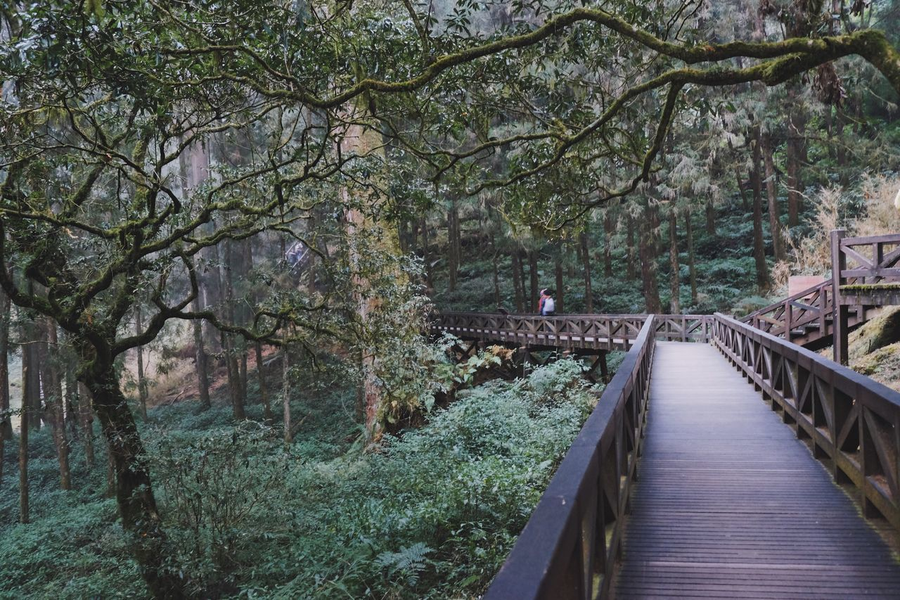 Tree Nature Growth The Way Forward Outdoors Footbridge Branch Day Beauty In Nature Architecture Plant Greenery Foggy Taiwan Alishan Scenery Nature_collection Forest Way Travel Adventure Wanderlust Journey Vacations Walkway