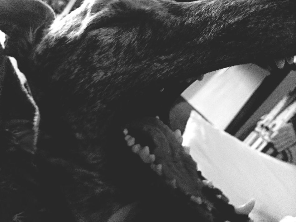 charades: crocodile (our favorite past time) Dog Greyhound Charades Crocodile