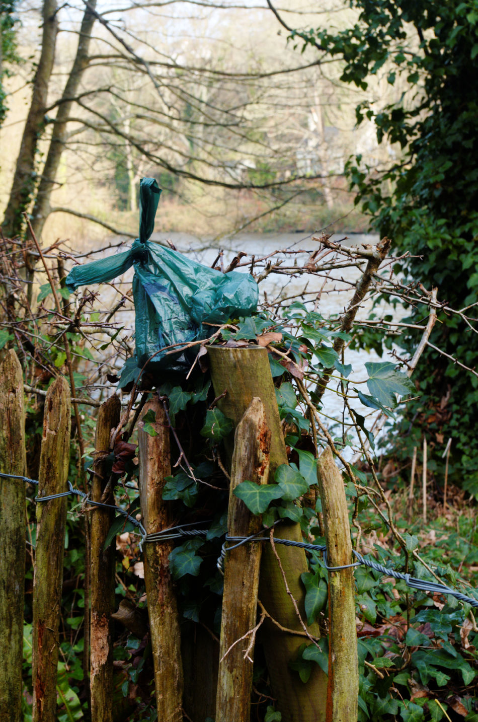 I had to capture this act of thoughtlessness and show it to the world. Someone has been responsible to put their dog's mess in a bag but irresponsible to leave the bag of mess lying around for someone else to dispose of. That is just plain lazy! Bag Dog Litter Fence Irresponsibly Responsible Jersey Me Reservoir Rubbish Thoughtless Waterworks Valley Woods