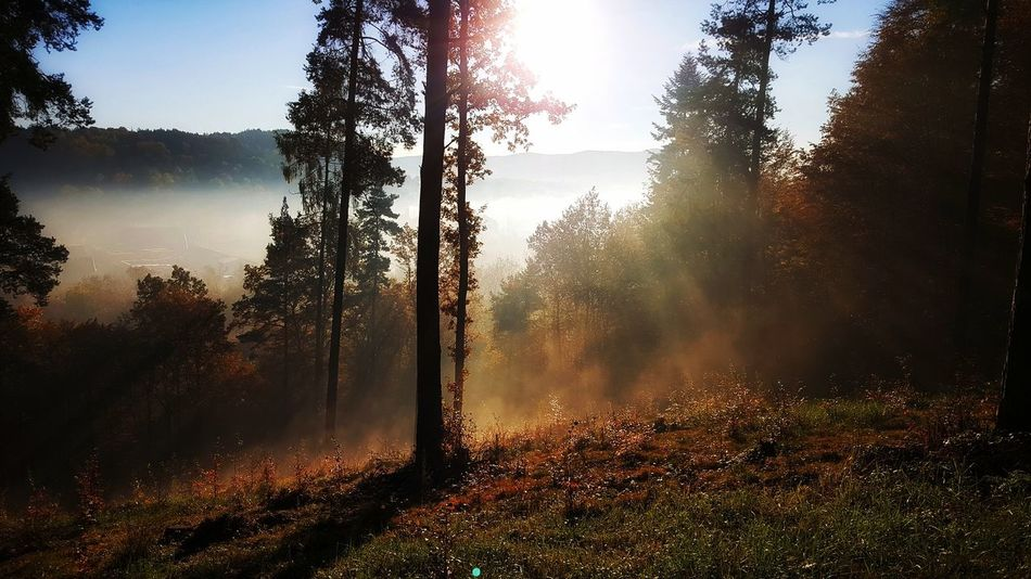 Beauty In Nature Day Fog Forest Growth Hazy  Landscape Mist Morning Nature No People Outdoors Poland Scenics Sky Tranquil Scene Tranquility Tree