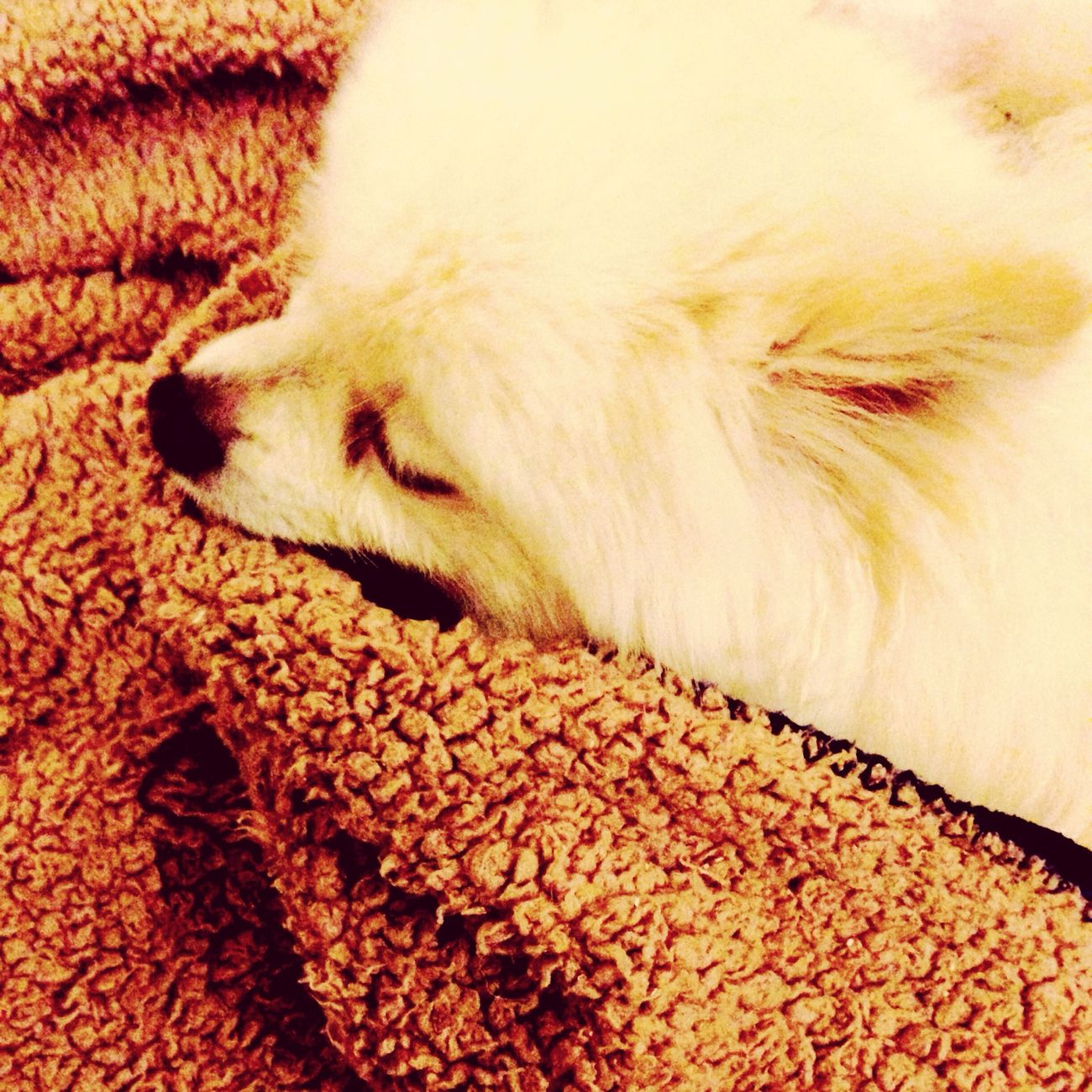 I Love My Dog Dog Sleeping Korosuke