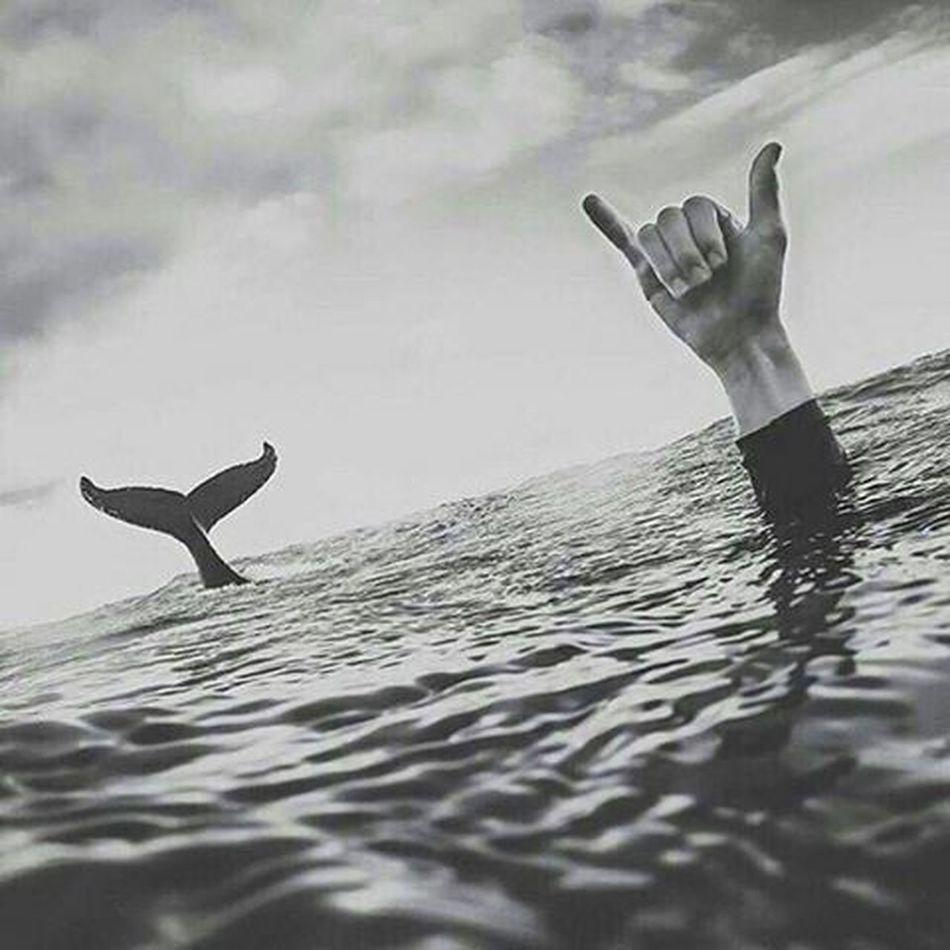 RandomCover Whale Sea Freedom Picsart MyEditing