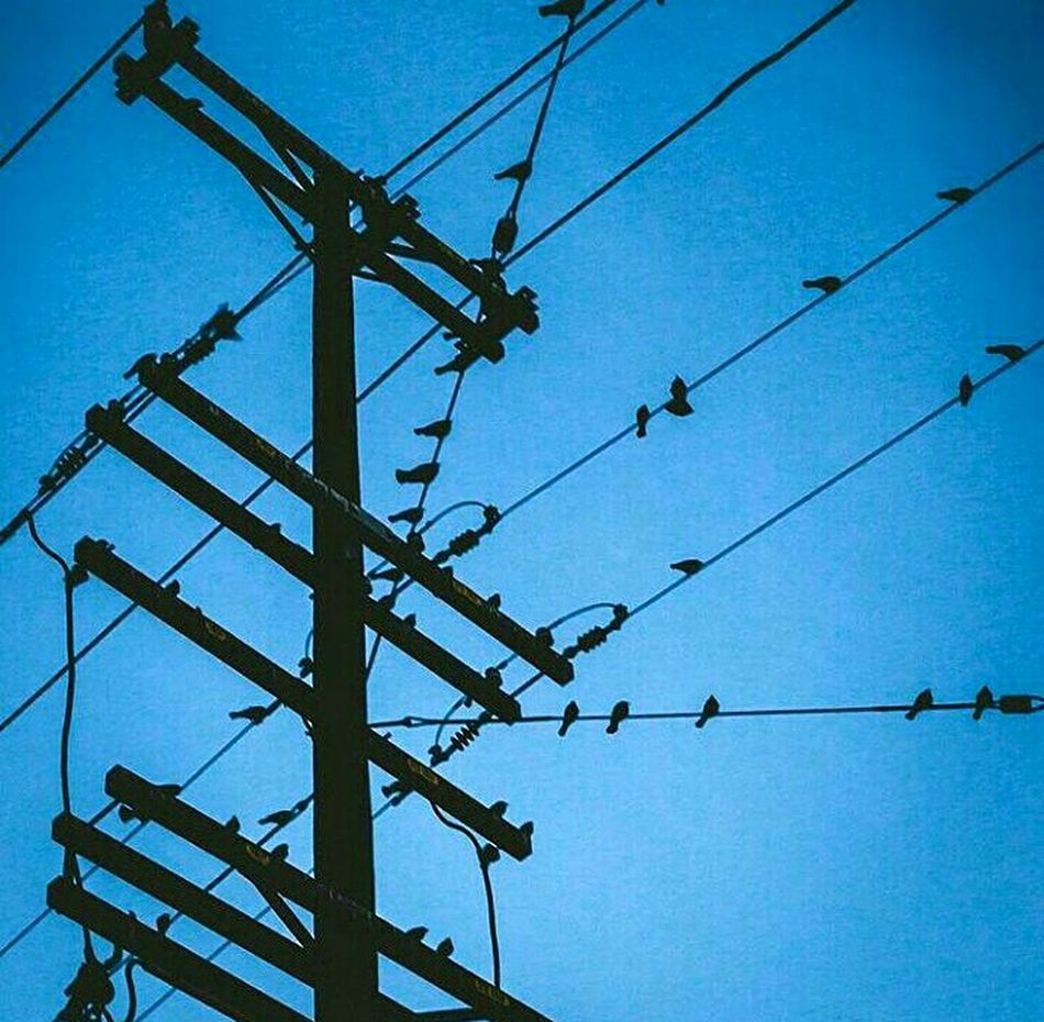 Low Angle View Electricity  Sky No People Outdoors Technology Industry Day Electricity Pylon Bird Photography Birdwatching Birdsofinstagram Birdphotography Electric Tower  Morelia, Michoacán Blue Sky And Clouds Photographylovers Photoshoot Cityscape Tranquility Beauty In Nature Nature Architecture Building Exterior Skyscraper