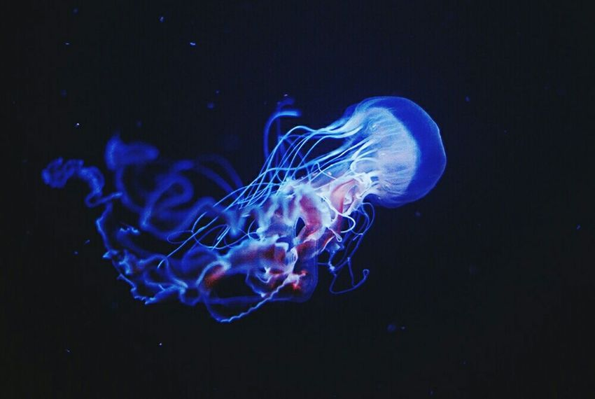 Berlin Zoo Jellyfish Underwater Underwater Photography See Acquarium Acquario Berlin Aquarium Blue Pink Animal Capture Berlin Beauty In Nature Deutschland 2016 Nature No People Water Animals