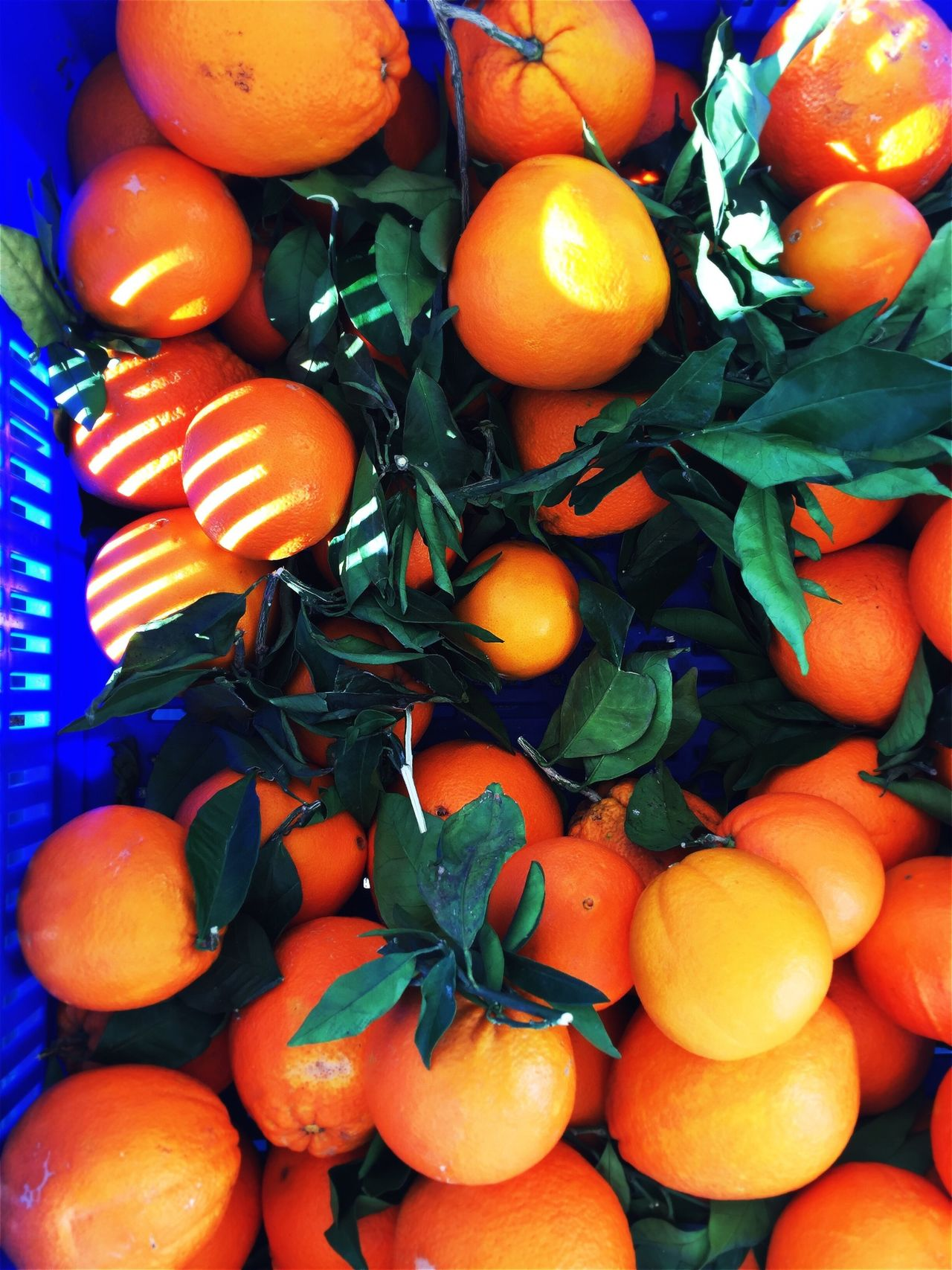 Fresh oranges in a box Orange Fruit Oranges SPAIN Harvest Agriculture Italien Diet Leaves Green Box Bio Food Healthy Health Farm Vitamins Fresh Market Shop Fruits Nobody Spanish Travel Juice