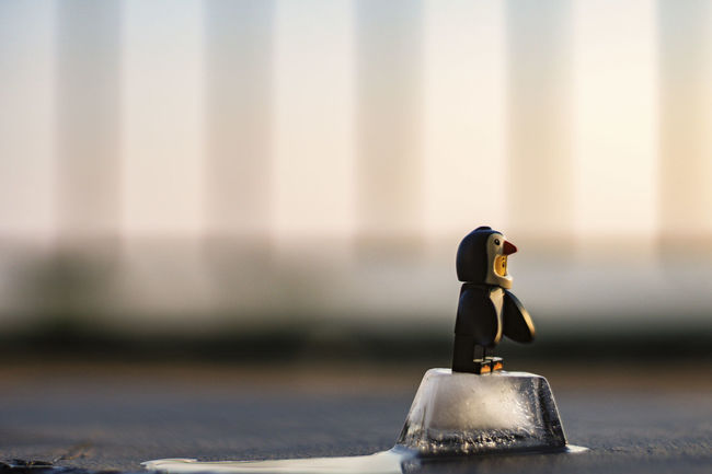 the last day from ice age Ice Ice Age Iceblock Last Man Standing LEGO Lego Minifigures Melting Shadow Sunset Zoo