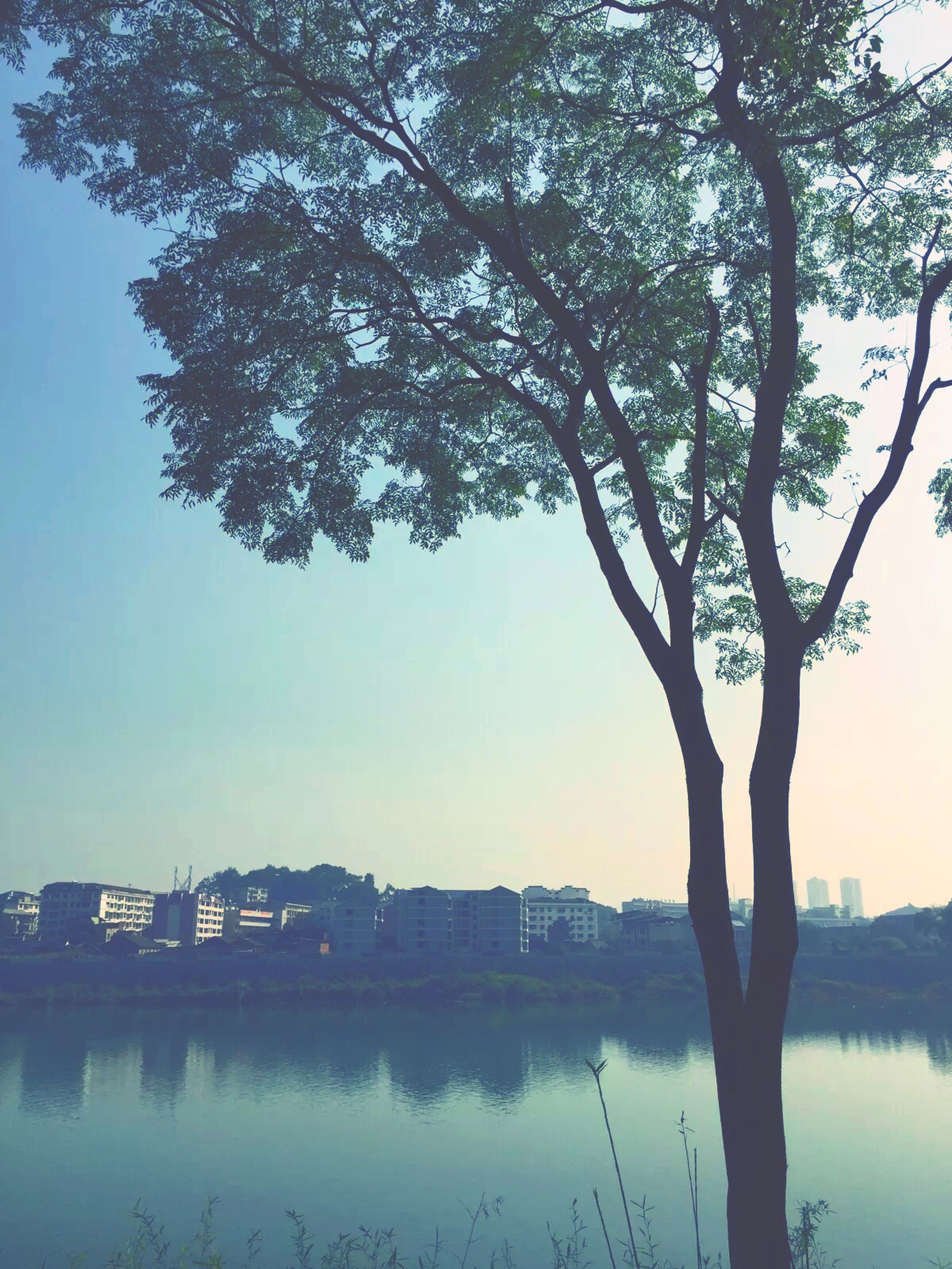 tree, water, waterfront, reflection, lake, building exterior, built structure, architecture, branch, clear sky, tranquility, river, nature, tranquil scene, bare tree, sky, beauty in nature, tree trunk, growth, outdoors